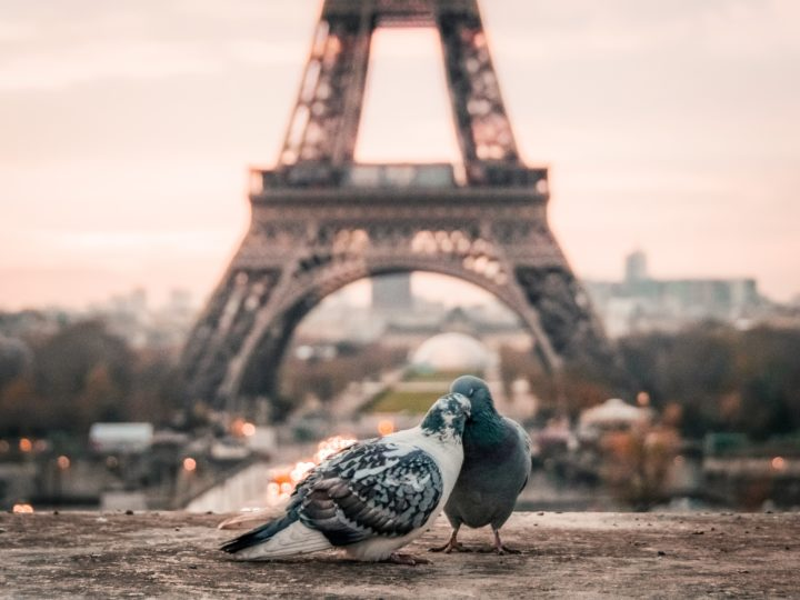 2018/2019 French Lessons Announced